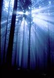 blå skog Royaltyfri Fotografi