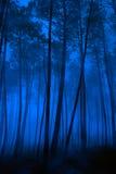 blå skog Arkivfoto