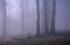 blå skog Arkivfoton