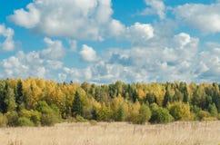 blå skogsky för höst Arkivbilder