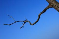 blå sky för abstrakt bakgrund Royaltyfri Foto