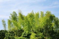 blå sky för bambu Arkivbild
