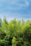 blå sky för bambu Royaltyfria Bilder