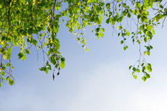 blå sky för filiallövverkgreen Arkivfoton