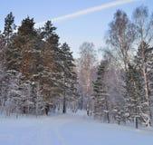 Blå skymning i vinterskogen. Royaltyfria Bilder