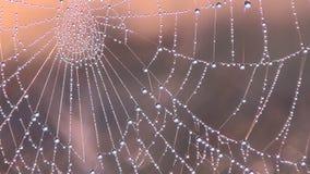 blå slapp spindeltonrengöringsduk arkivfilmer