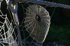 blå slapp spindeltonrengöringsduk Royaltyfri Fotografi