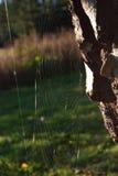 blå slapp spindeltonrengöringsduk Royaltyfri Bild