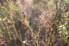 blå slapp spindeltonrengöringsduk Arkivbild