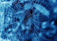 blå slapp spindeltonrengöringsduk Royaltyfria Foton