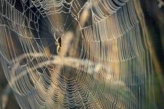blå slapp spindeltonrengöringsduk Arkivfoton
