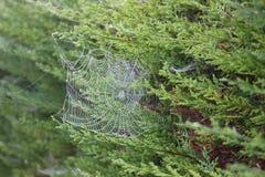 blå slapp spindeltonrengöringsduk Royaltyfria Bilder