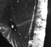 blå slapp spindeltonrengöringsduk royaltyfri foto