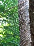 blå slapp spindeltonrengöringsduk Arkivbilder
