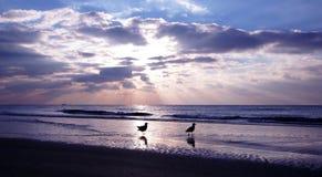 Blå solnedgång med seagulls arkivbilder