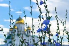 Blå sommar blommar på bakgrunden Royaltyfri Fotografi