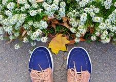 Blå sportmakasinställning nära en rabatt med vita blommor, skönhet och mode, blom royaltyfria bilder