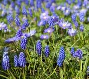 blå springtime Arkivbild