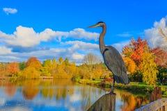blå stor heron Arkivfoton
