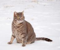Blå tabbykatt som sitter i snow fotografering för bildbyråer