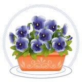 blå terrakotta för pansiesplantersky Royaltyfria Foton