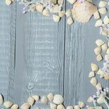 Blå träbakgrund med snäckskal och koraller Arkivfoto