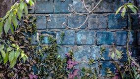 Blå trädgård Royaltyfri Fotografi