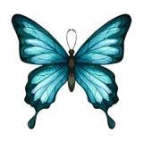 Blå tropisk fjäril för vattenfärg royaltyfria foton