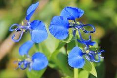 Blå under - bakgrund för lös blomma - naturs romans Arkivbilder