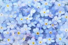 Blå vår glömma-mig-nots blommaliten bukett royaltyfria foton