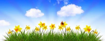 Blå vårhimmel och gulingpåsklilja Arkivbild