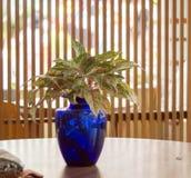 Blå vas på tabellen Fotografering för Bildbyråer