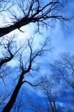 Blå vinterSky Arkivbild
