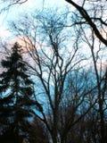 Blå vinterskymning royaltyfri bild