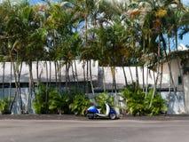 Blå vit motorisk sparkcykel med palmträd Royaltyfri Fotografi
