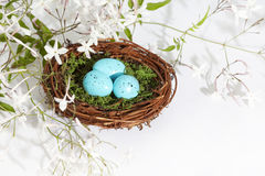 Blåa ägg 2 för rede Arkivfoton