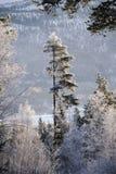 Blåa berg för frostträd arkivbilder