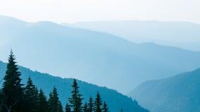 Blåa berg och gran-träd i Ukraina Carpathians Arkivfoton