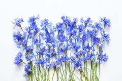 Blåa blåklinter över vit Royaltyfria Foton