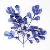 Blåa bladdesignbeståndsdelar Garneringbeståndsdelar för inbjudan, bröllopkort, valentindag, hälsningkort Isolerat på vita lodisar arkivfoton