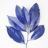 Blåa bladdesignbeståndsdelar Garneringbeståndsdelar för inbjudan, bröllopkort, valentindag, hälsningkort Isolerat på vita lodisar royaltyfria foton