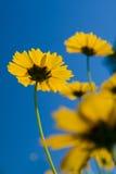 blåa blommor över livlig yellow för sky arkivfoto