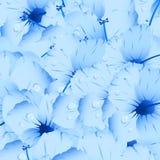 blåa blommor arkivfoto