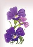blåa blommor vektor illustrationer