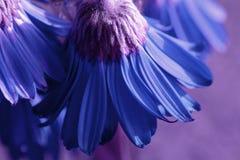 blåa blommor royaltyfri foto
