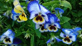 blåa blommor Arkivfoton