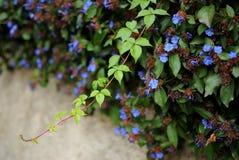 blåa blommor Arkivbild