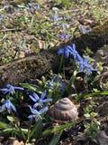 blåa blommor royaltyfri bild