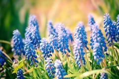 Blåa blommor för härlig sommar som växer utomhus royaltyfri bild
