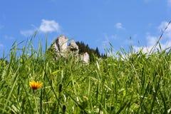blåa blommor gräs skyen Arkivfoto